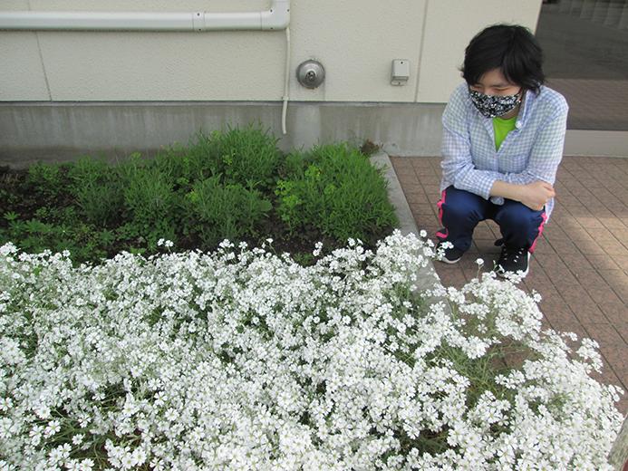 おしま菌床きのこセンター 綺麗に咲きました。