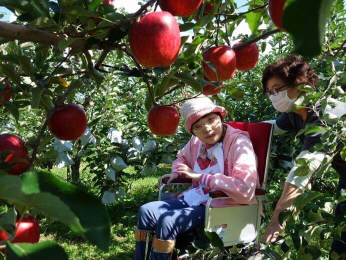 青年寮通所部にじ リンゴ狩りに行ってきました!