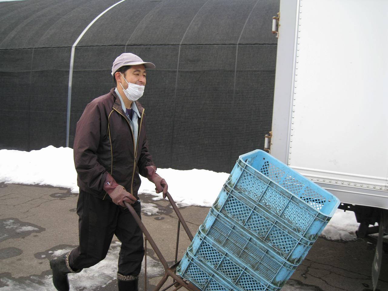 おしま菌床きのこセンター「一輪車で運搬作業」