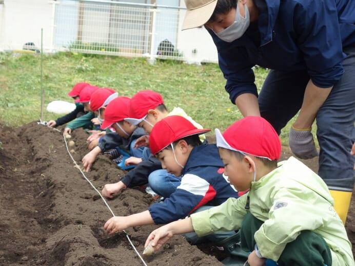 七重浜こども園 「芋植え」