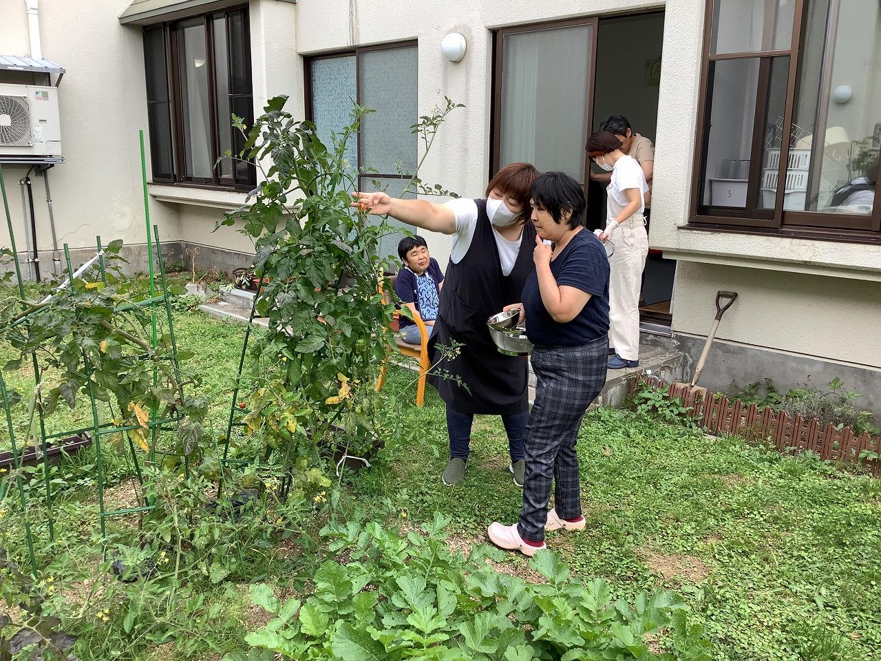 星が丘寮 「5寮:夏野菜収穫!」